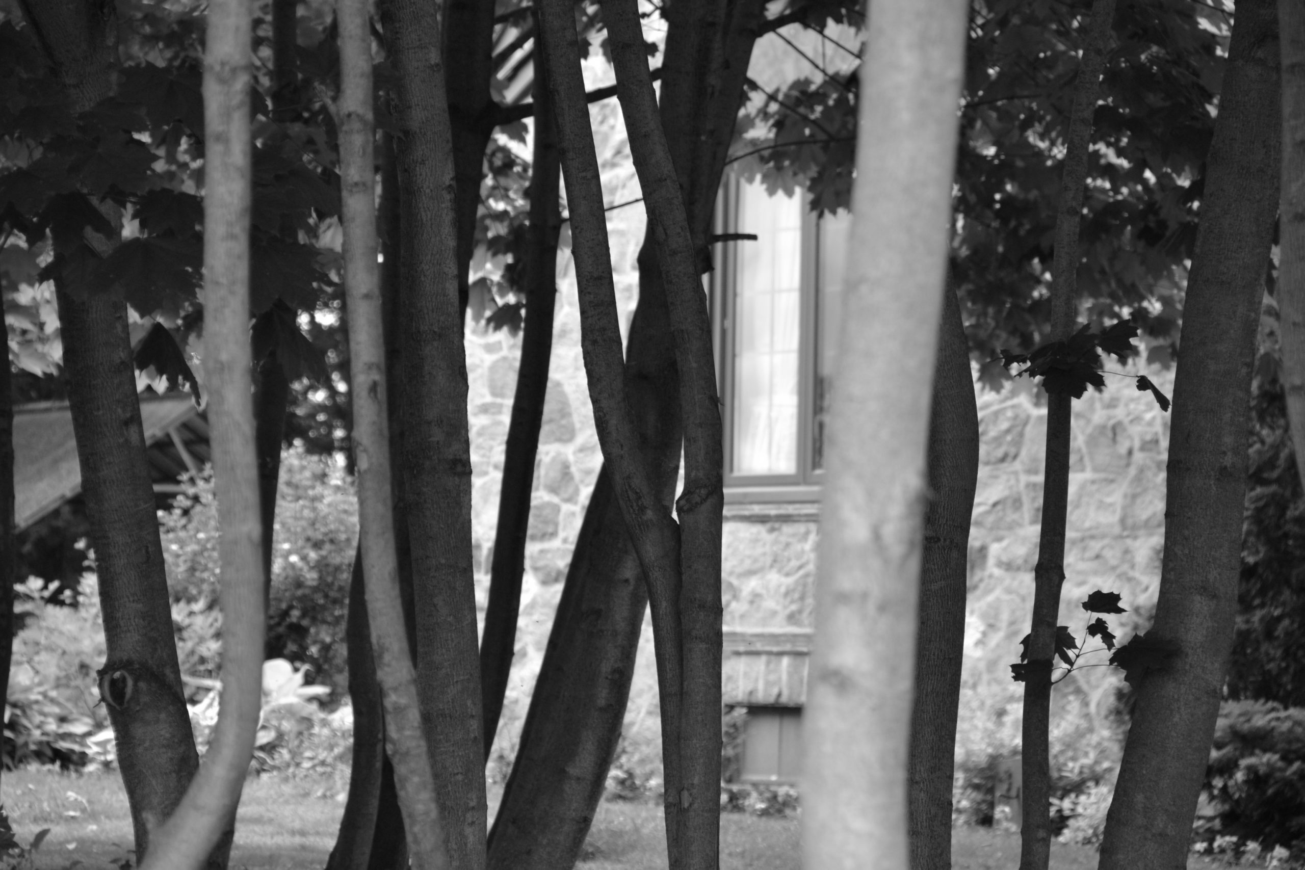 Photo of trees in black and white in front of a window.